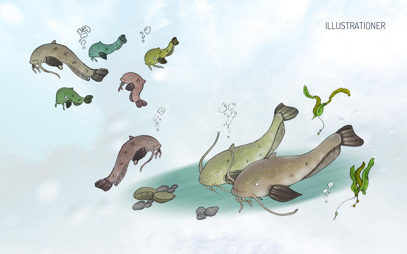 Šamų rojus - illustrationer